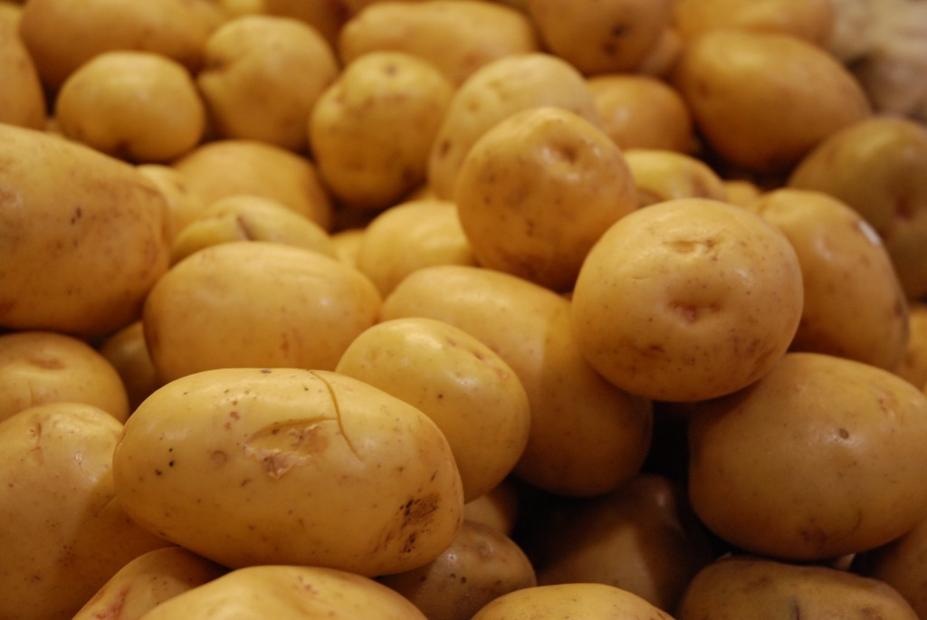 Looking for the perfect, all-around potato? Here are the reasons why you should grab Yukon Gold Potatoes.
